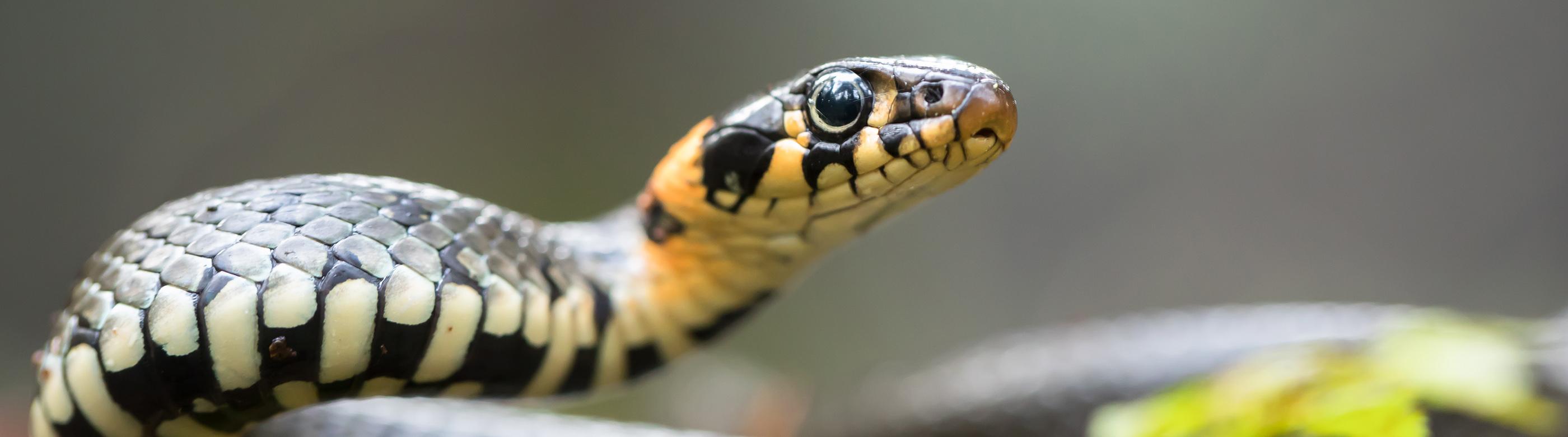<p>Beim Ausbau der S 11 sollen geschützte Tierarten bestmöglich geschont werden. Aber welche Tierarten gibt es dort überhaupt? Wir gehen auf Expedition mit einem Reptilien-Experten – und werden fündig.</p>